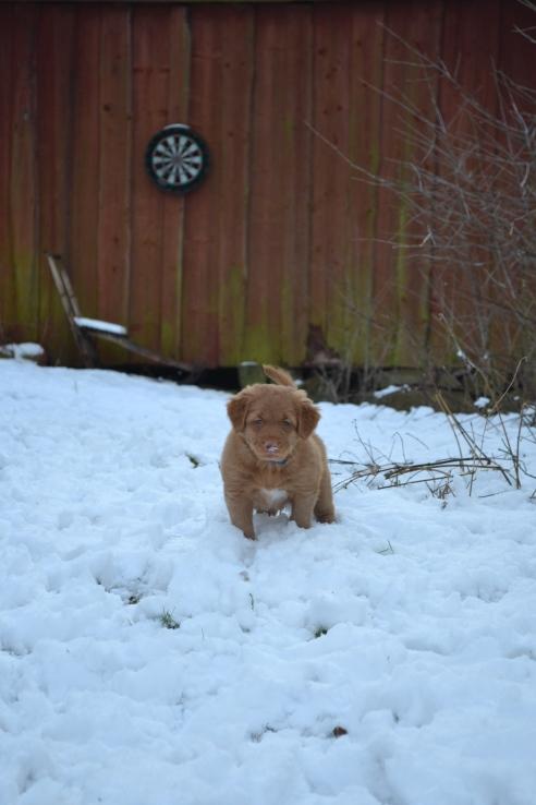 Blå i snön
