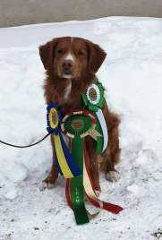 Ziggy Champion